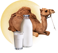 Молоко Верблюда
