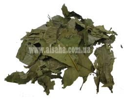 Специи и пряности: листья Гуавы